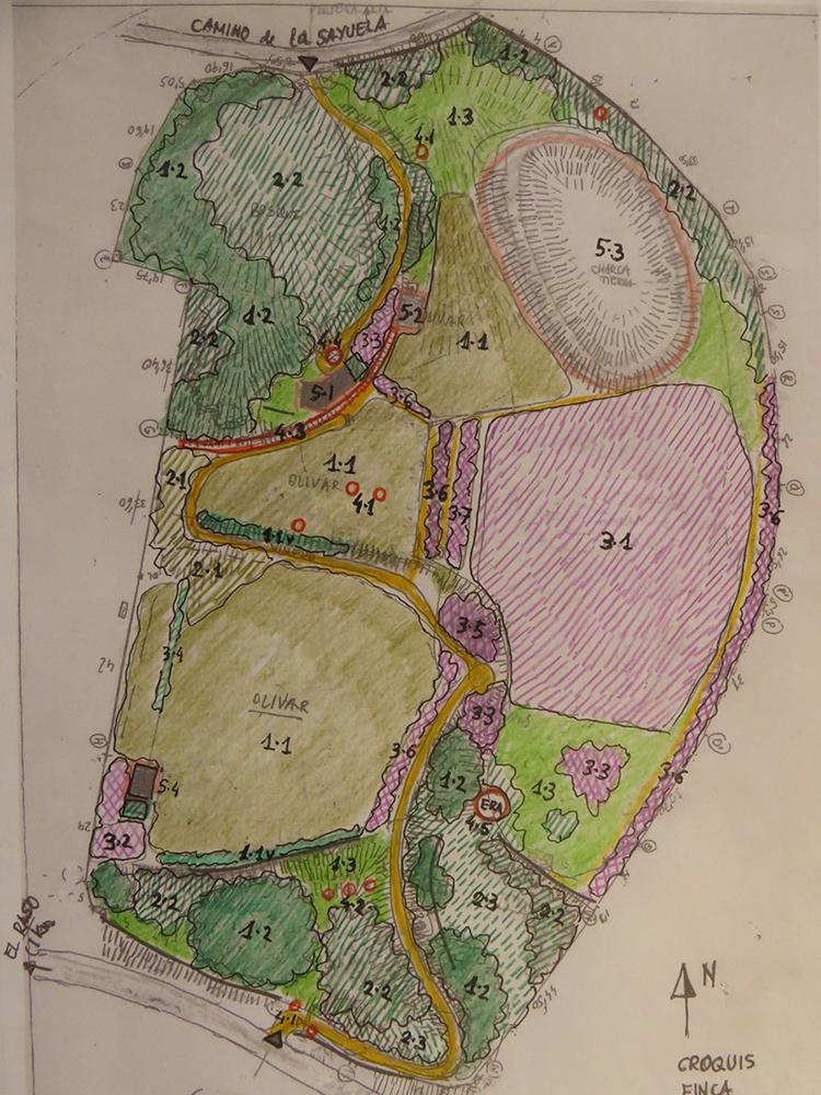 Figura 5. Plano 3. Estrategias de intervención. •Conservación (1): Zonas de olivar existente (1-1); Alineaciones y taludes de viñedo (1-1v); Bosque autóctono mixto (1-2);  Praderas naturales estacionales (1-3). •Regeneración y compleción (2): Olivar (2-1); Bosque autóctono mixto (2-2); Mixto olorosas arbustivas y bosque autóctono (2-3).   •Nuevos cultivos y nuevas especies forestales (color lila) (3): Higueral (3-1); Frutales (3-2); Bosquetes de caducifolias (3-3); Emparrado vertical uva blanca (3-4); Cítricos (3-5); Alineaciones de caducifolias (3-6); alineaciones de almendros (3-7).   •Hitos vegetales singulares (color rojo) (4): Cipreses (4-1); Chopos columnares (4-2); Alineación borde reguera de adelfas y sauces de ribera (4-3); Círculo de lirios (4-4); Era antigua bordeada de rebollos (4-5).   •Construcciones y movimiento de tierras (5):  Casa nueva (5-1); Alberca de riego/ baño (5-2); Charca de tierra (5-4); Casa vieja (5-5)