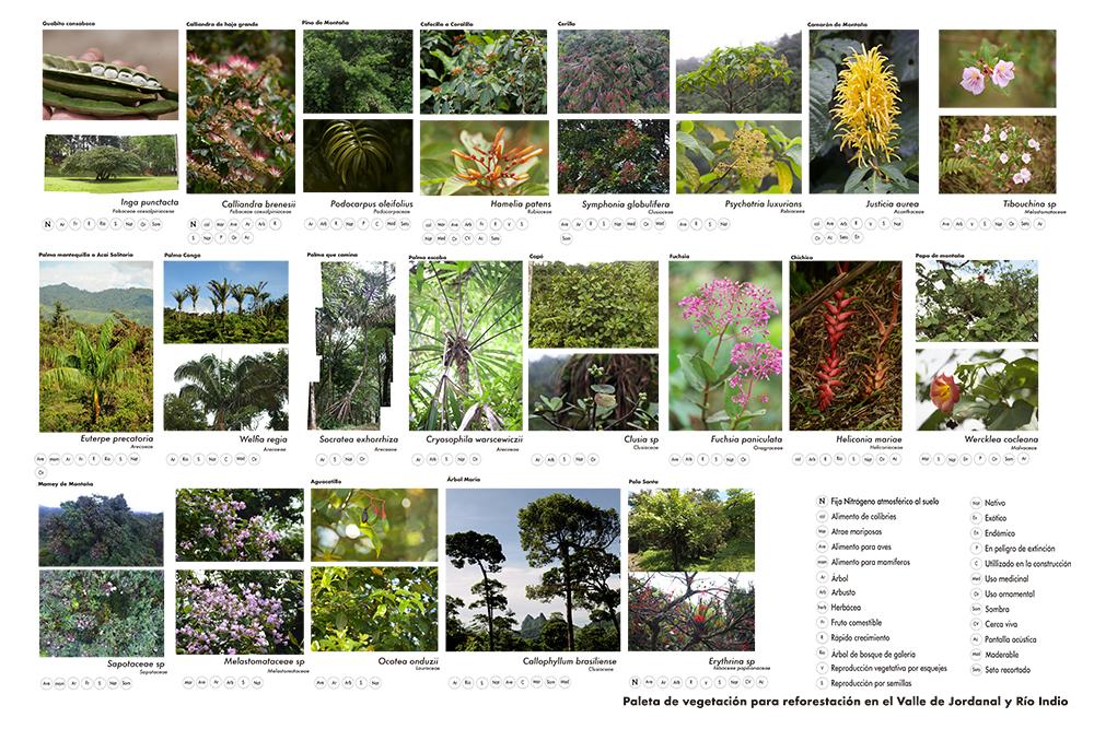Figura 5. Algunas de las especies escogidas para la reforestación y vegetación de Jordanal. Fuente: Laap.space