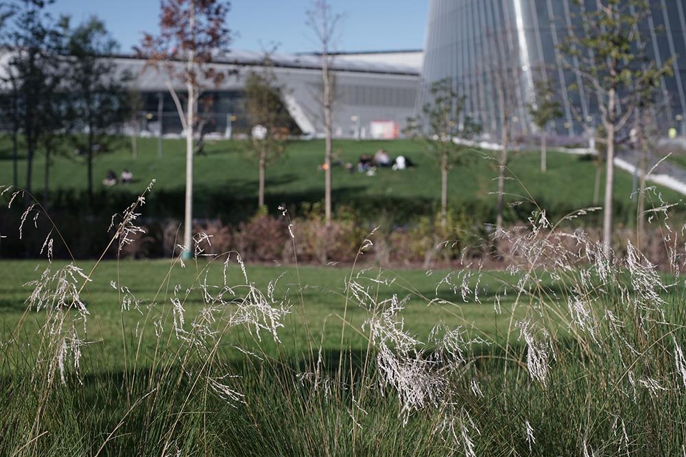 Figura 6. Vistas del parque.