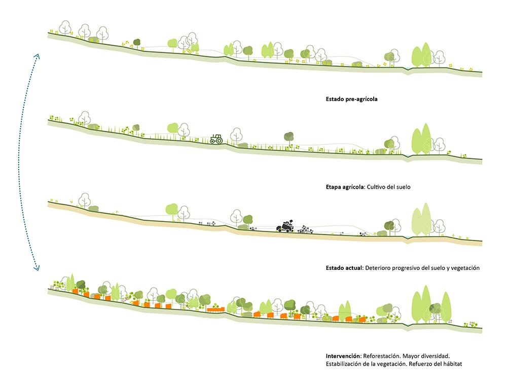 Figura 7. Reforestación de La Solana. Evolución del suelo desde el estado anterior a la explotación agrícola hasta la intervención de ordenación
