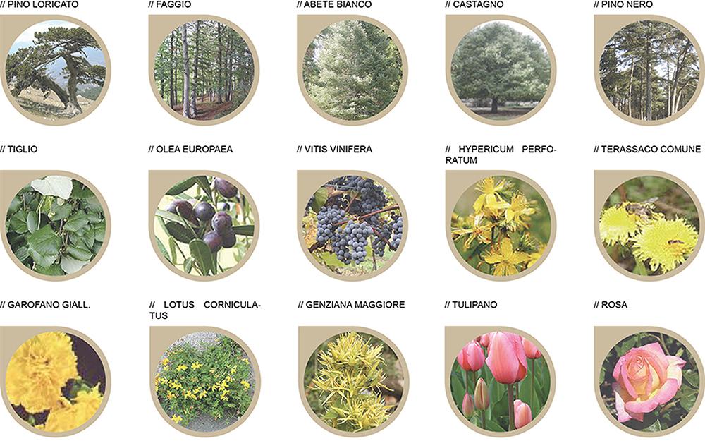 Figura 11. Estudio de la vegetación de proyecto