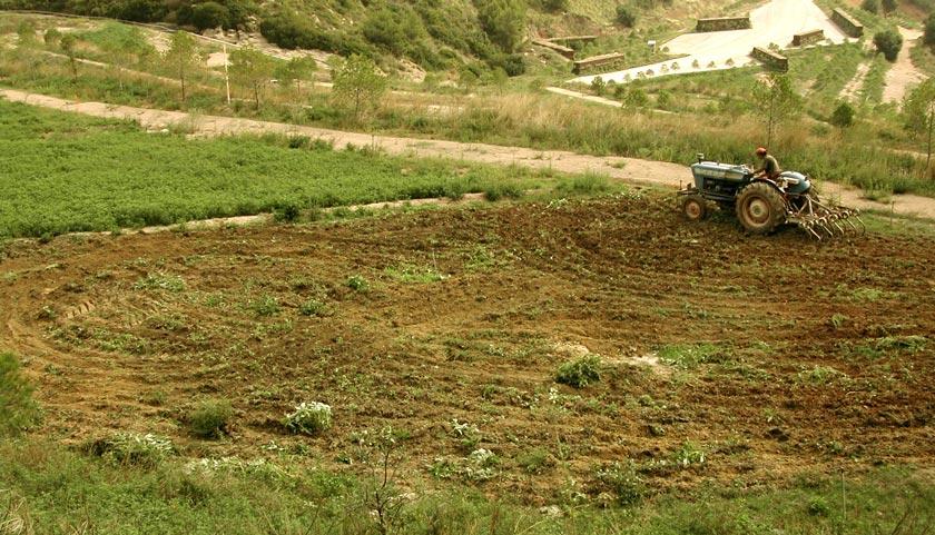 Figura 15: mantenimiento y productividad fruto de la actividad agrícola