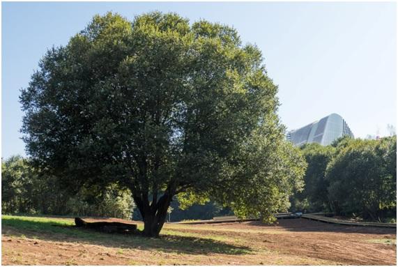 Figura 22. La pradera grande. Parque do Lago. Foto: Isabel Aguirre.