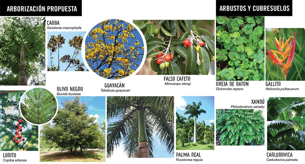Figura 22. Especies especificadas en el proyecto. Plantas nativas y regionales.