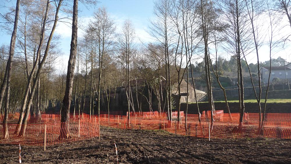 Figura 19. Protección de los árboles existentes durante la obra.